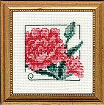 "Picture of 4"" x 4"" - Carnation"