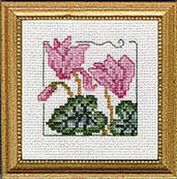 "Picture of 4"" x 4"" - Cyclamen"