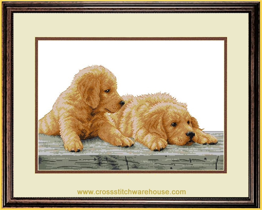 Picture for category DOGS